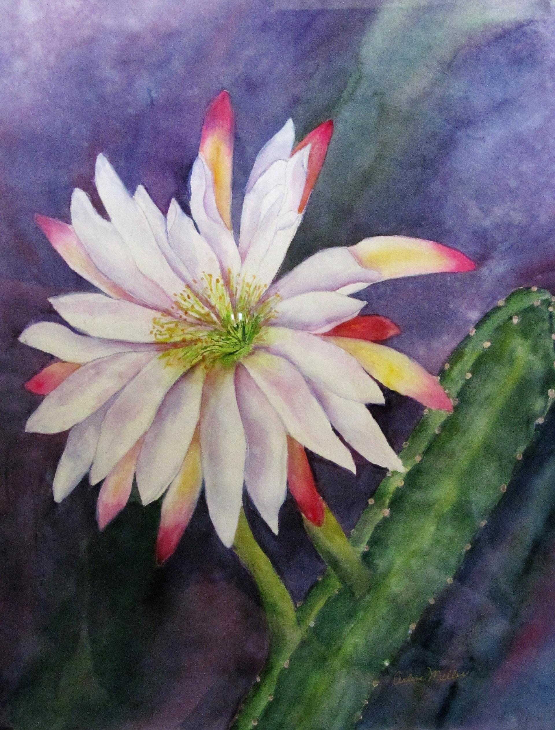 41c Arlene Miller - Desert Glory - watercolor