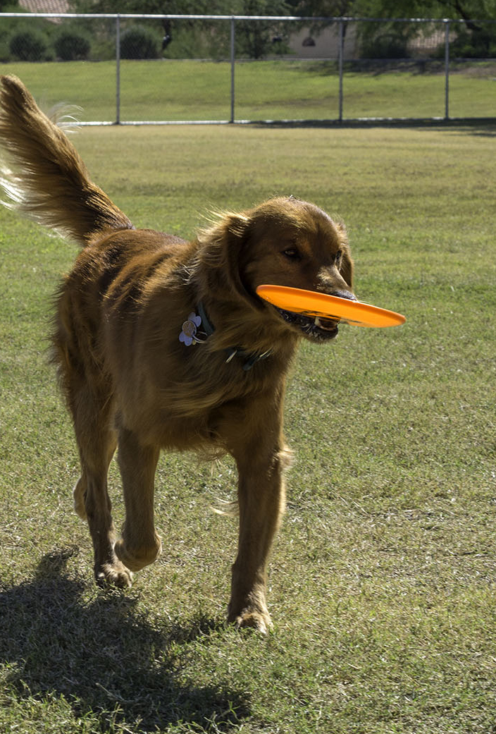 Dog with frisbee at park